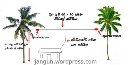 coconut01L